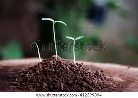Small plant on pile of soil  - stock photo