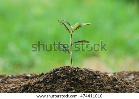 Small plant on pile of soil