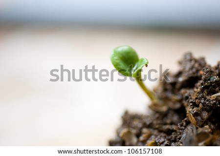 Small plant on pile of soil in the garden - stock photo
