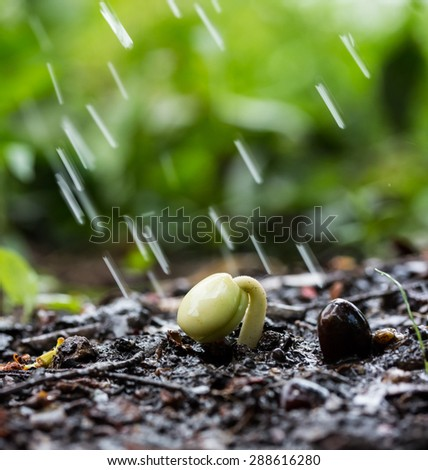 Small plant on pile of soil in the garden and raindrops - stock photo