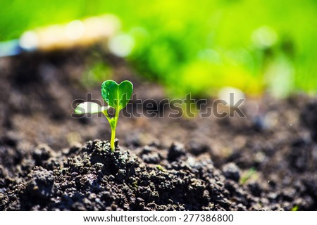 Small plant on pile of soil in the garden. new life concept - stock photo