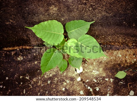 Small plant on the cement floor. - stock photo