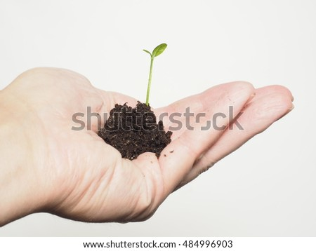 Small plant or tree growing in a tiny pile of fresh soil inside a person's hand