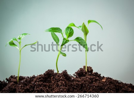 small plant peppers on green background