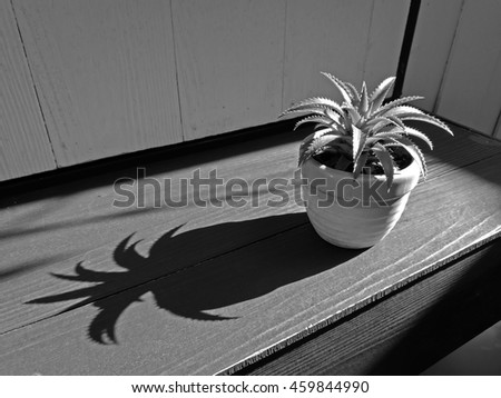 Small plant pot. black and white style. - stock photo