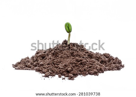 Small plant seedling isolated on white background - stock photo