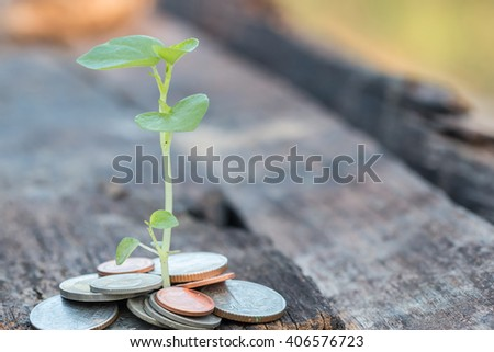 Small plant si growing with money