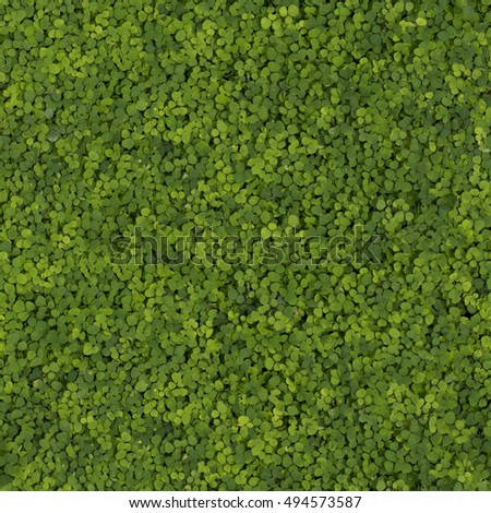 Small plants growing four seamless patterns