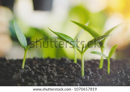 Small Plants Growing On Soil New Life Concept With Sunlight Background