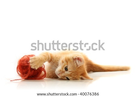 Small playful kitty, isolated on white - stock photo
