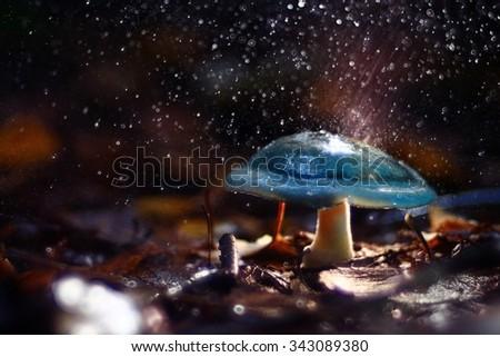 small poisonous mushroom, magic picture - stock photo