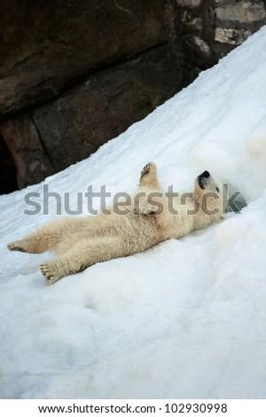Small polar bear cub having fun on a snow - stock photo