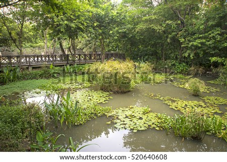 Small pond and bridge in a national park in the city of Guayaquil, Ecuador, on an overcast day.
