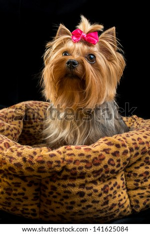 Small pretty dog sitting in basket - stock photo