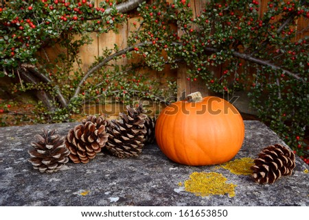 Small pumpkin and fir cones on a stone bench with background of red cotoneaster berries - stock photo