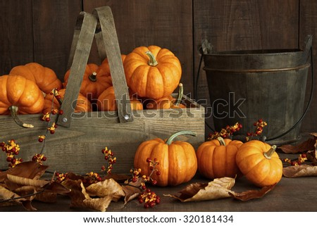 Small pumpkins in wooden box with leaves and berries