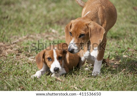 Small puppies relaxing in green grass.