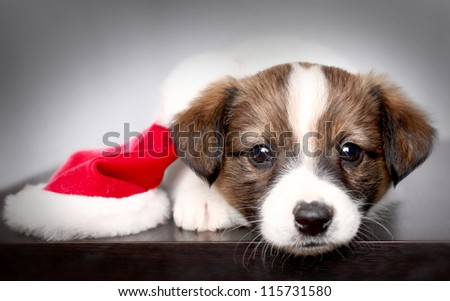 small puppy and New Year's cap - stock photo
