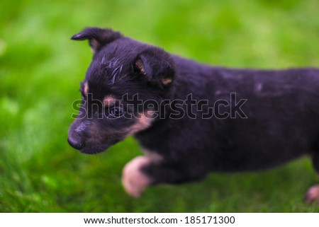 Small puppy mongrel on background of green grass - stock photo