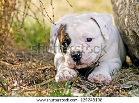 small puppy on a spring day - stock photo