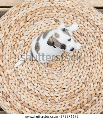 Small Puppy Relaxing Outside on Woven Ottoman Stool - stock photo