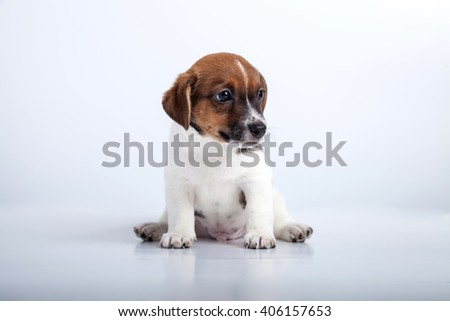 small puppy sit at back at side at white background