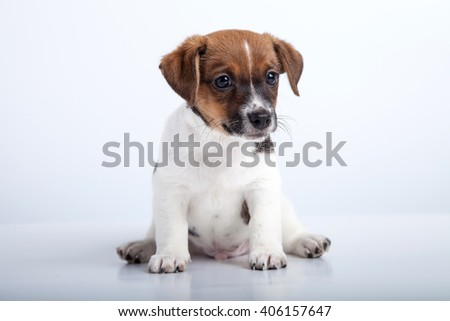 small puppy sit at white background