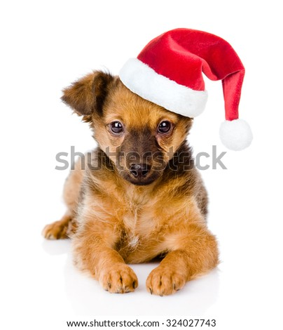 Small puppy with red christmas hat lying in front view. isolated on white background