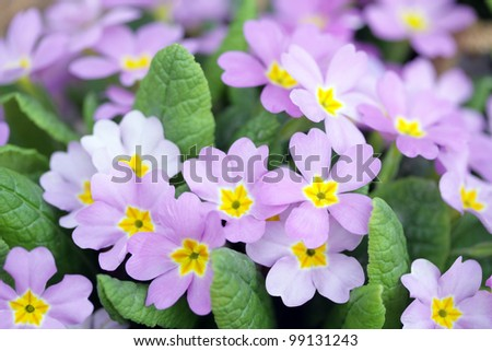 small purple flowers in grass stock images, royaltyfree images, Beautiful flower