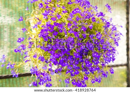 small purple flowers , fresh flowers , amazing flowers,violet flowers,violet ,violet flowers vase, violets on green ,purple spring flowers,purple, green,green leaves ,small leaves,flowers in vase  - stock photo