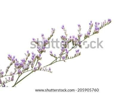small purple limonium flowers isolated on white background
