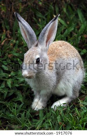 small rabbit - stock photo