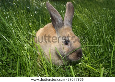 Small rabbit in a green grass.