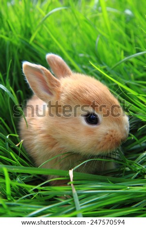 small rabbit in the grass