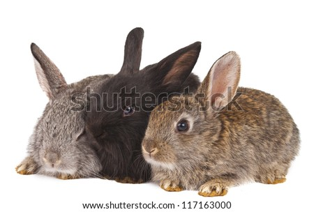 small rabbits isolated on white background