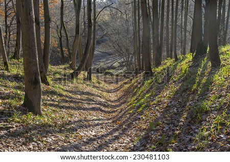 Small ravine in the autumn forest in back light. October, nice sunny day.
