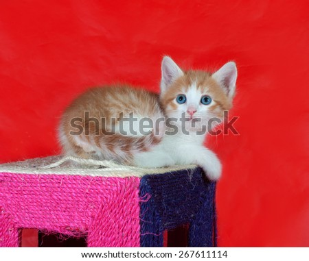 Small red and white kitten sitting on scratching post on red background - stock photo