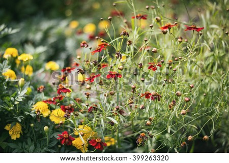 small red and yellow flower with unfocused field of grass,vintage tone, bokeh - stock photo
