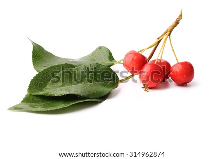small red apples on a branch with leaves isolated on white background - stock photo