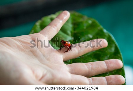 small red blue frog on a hand - stock photo
