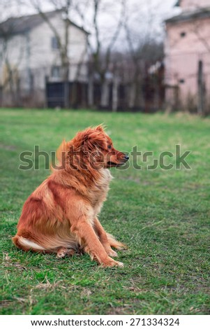 Small red Dog Collar Sitting On Grass