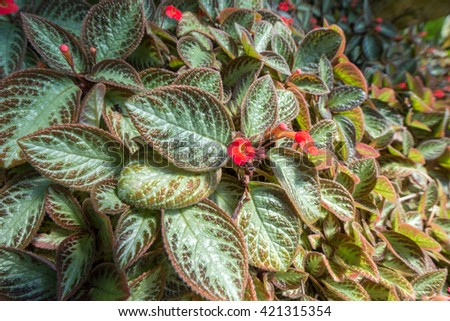 Small red flowers on plant with green leaves