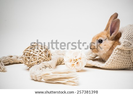 Small red haired easter bunny playjng with braided balls and hiding in beige pastel knitted hat on off-white studio background - stock photo