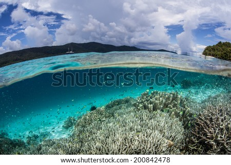 Small reef fish swim near a shallow coral reef near the island of Waigeo in Raja Ampat, Indonesia. This region is known for its high marine biological diversity and great scuba diving and snorkeling.