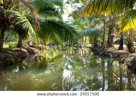 Small river in deep tropical rain forest, back waters, India