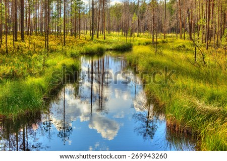 Small river in wild forest in Finland. Summer landscape. - stock photo