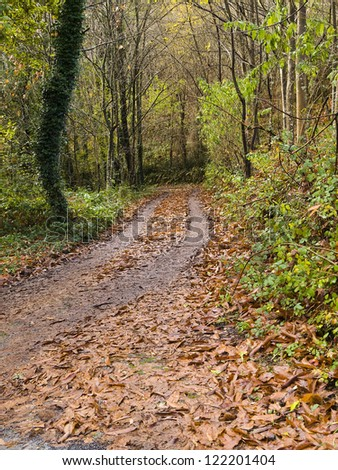 Small road in the forest. The photo is taken in autumn