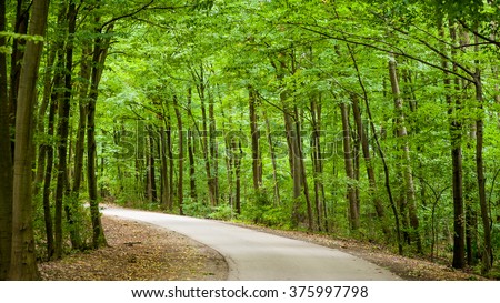 Small road in the spring green forest - stock photo