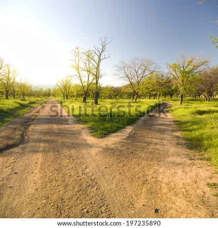 Small road to the park, forking divergently. - stock photo