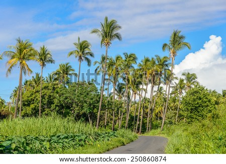 Small road towards a palm tree forest, la Reunions island - stock photo